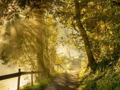 Ruhiger Waldweg in Burgstall